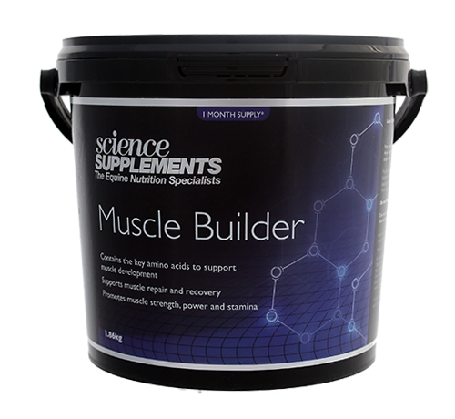 Muscle Builder - Horse Muscle Building Supplement